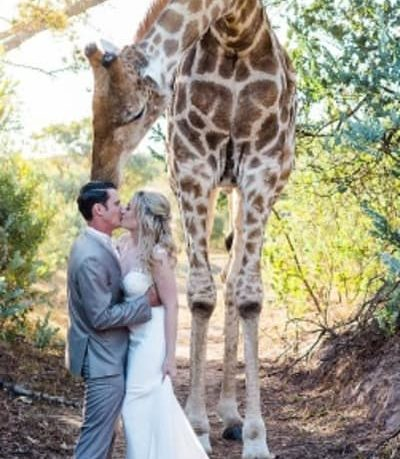 Casal é surpreendido por girafa durante ensaio de casamento