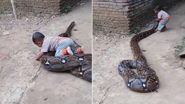 Criança é filmada pelo pai brincando com enorme píton