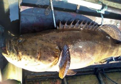 Peixe quase extinto é achado em barco no acesso ao Porto de Santos